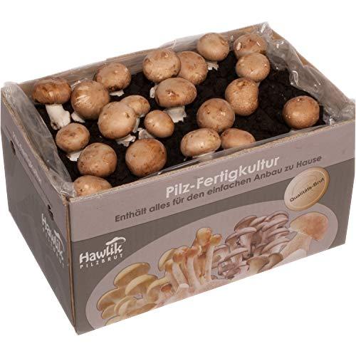 Große XXL Steinchampignon Pilzkultur I Hawlik Pilzbrut I kinderleicht Pilze selber züchten I ohne Vorkentnisse I Perfektes Geschenk