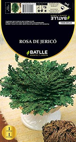 semillas-batlle-072301-bulbo-rosa-de-jerico