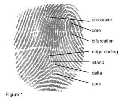 Safran-Morpho-MSO-1300-E3-Fingerprint-Scanner