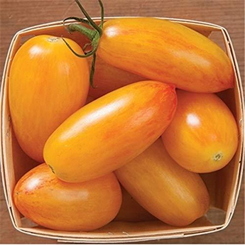 Pinkdose Fruits en pot Légumes cerises tomates bonsaï noir bonsaï princesse noire nacré perle F1 petite cerise 200pcs: 10