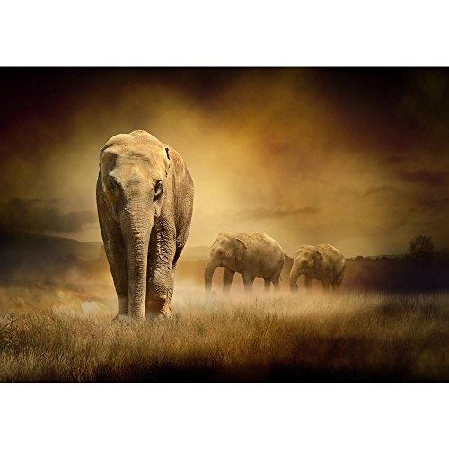 Vlies Fototapete PREMIUM PLUS Wand Foto Tapete Wand Bild Vliestapete - AFRICAN SAVANNA - Afrika Savanne Elefant Elefanten Gras Landschaft - no. 011, Größe:350x245cm Vlies (African Fotos)