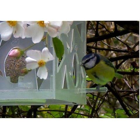 Alimentatore a forma di regalo Flock Follies edizione limitata bianco trasparente - Nyjer Seed