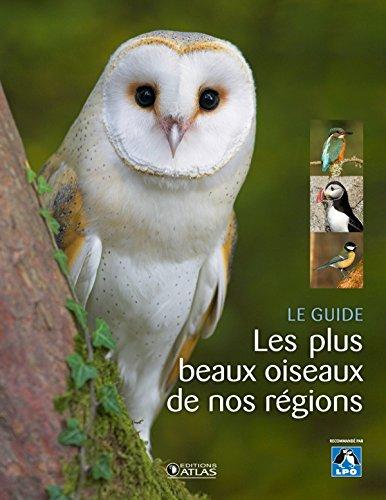 Les plus beaux oiseaux de nos régions