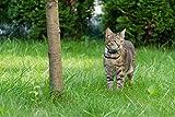 Girafus® Pro-Track-tor Haustier Hund Katze Kleintier Finder Sucher Ortung + Ladegerät - 6