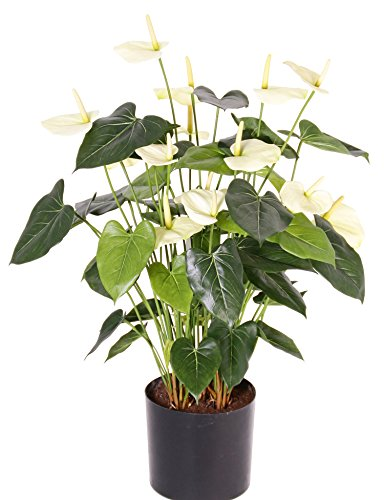 artplants Set 2 x Künstlicher Anthurium Busch KOUKO, 14 Blüten, Creme, 80 cm – Kunstblume/Deko Blumen