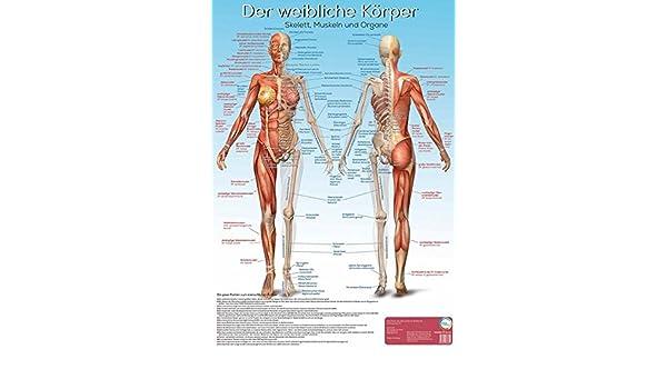Lernposter Anatomie - Der weibliche Körper: Der weibliche Körper mit ...