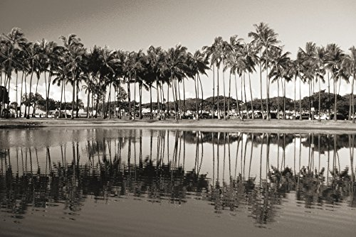 The Poster Corp Mary Van de Ven/Design Pics - Hawaii Oahu ALA Moana Beach Park Line of Palm Trees and Reflections In Pond (Sepia Photograph). Photo Print (43,18 x 27,94 cm)