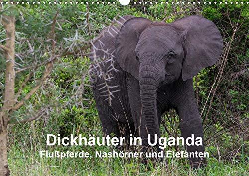 Dickhäuter in Uganda - Flußpferde, Nashörner und Elefanten (Wandkalender 2020 DIN A3...