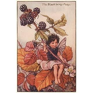 Blackberry Fairy by Cicely Mary Barker. Autumn Flower Fairies, old print c1935