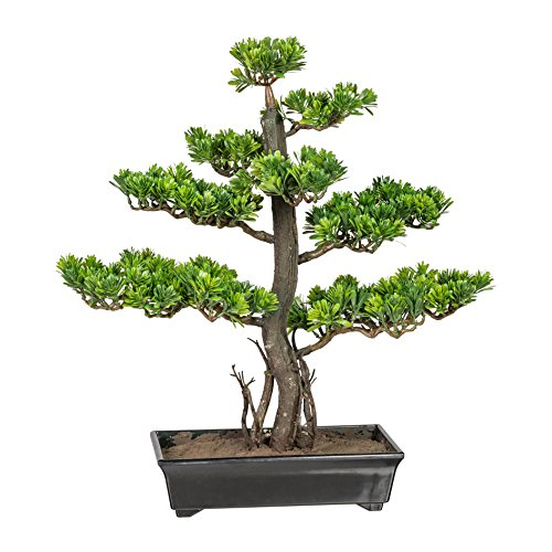 wohnfuehlidee Kunstpflanze Bonsai Podocarpus Grün, Inklusive Kunststoff-Schale, Höhe ca. 50 cm