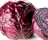 Portal Cool Semi Cavolo cappuccio rosso, Acre Rosso, Heirloom Semenza di cavolo, non-OGM Cavolo Seed, 100CT