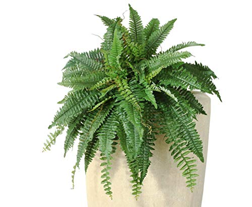 Königsfarn Riesenversion mit 38 Blattzweige Durch. 80cm - künstliche Pflanzen, Kunstpflanzen