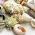 Sea Shells Set L 5 Stück von Dohse Aquaristik