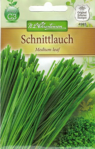 Chrestensen Schnittlauch 'Medium leaf' mittelgrobröhrig mehrjährig (Allium schoenoprasum
