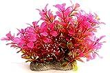 Aquarium-Pflanze Terrarium-Hintergrund Wasserpflanze 12cm auf Stein PF63