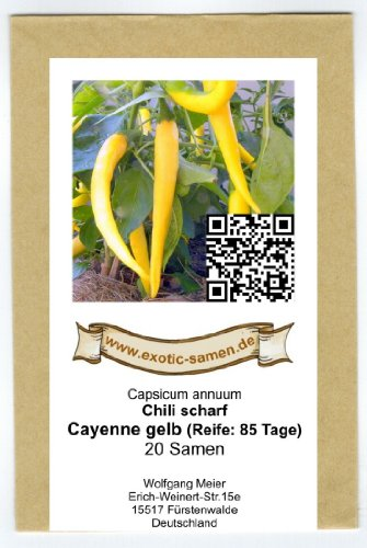 Eine ertragreiche und aromatische Neuzüchtung - Cayenne-Chili gelb - 20 Samen