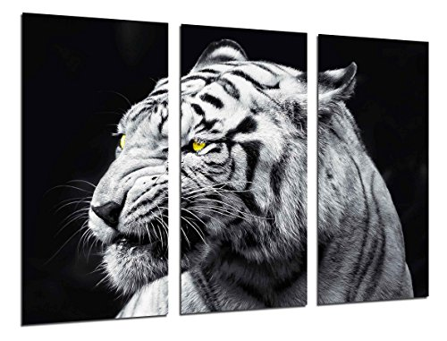 Cuadro Fotográfico Naturaleza Animales Salvajes
