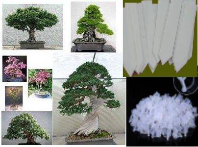 bonsai-tree-seeds-mixed-pack-conifers-deciduous-flowering-best-bonsai-selection