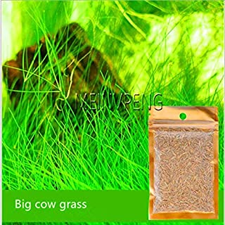 Shopmeeko Verlust Promotion!Nicrew Freies Verschiffen Aquarium Gras Bonsai Wasser Gräser Zufällige Wasserpflanze Gras Indoor Verschönerung Pflanze: Große Kuhgras