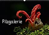 Pilzgalerie (Wandkalender 2018 DIN A3 quer): Faszinierende Pilzaufnahmen (Monatskalender, 14 Seiten ) (CALVENDO Natur) [Kalen