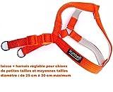Gemeinsam Leine + Geschirr für Hunde von Kleiner und mittlerer Größe,. Durchmesser von: 25cm mindestens bis 30cm maximal, Leine Klassische und Geschirr verstellbar, Farbe Orange und weichem Futter Farbe Grau