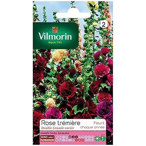 Vilmorin - Sachet graines Rose trémière double grande variée