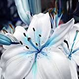 #10: Floral Treasure 20Pcs Blue Rare Perfume Lily Seeds