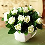 AGROBITS 20 PC/Bolsa de Plantas en maceta Jazmín Sambac Jasminum Bonsai Hermosa flor de Bonsai para jardín fácil de cultivar