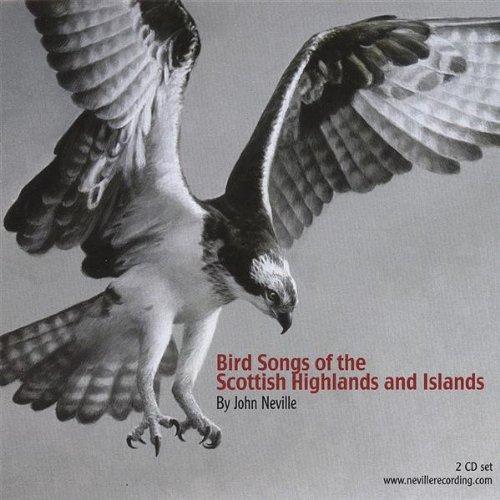 White-Tailed Eagle (Eagle White-tailed)