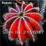 Las semillas reales Mini Cactus 100 PC mezcladas raras plantas suculentas Bonsai Flores Perenne Planta de hierba para la cubierta fácil crecer en macetas de 17