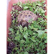 Shelled Warriors Luxury Tortoise 7000 seed mix 5g 63 species of plants/flowers