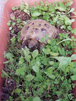 shelled-warriors-luxury-tortoise-7000-seed-mix-5g-63-species-of-plants-flowers