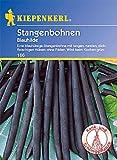 Bohne Blauhilde / Stangenbohnen