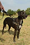 Latz Hund TG. Große Brustgurt mit Stirnband grau Mis. L