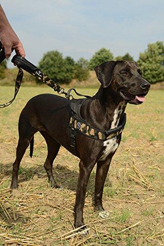 Preisvergleich Produktbild Latz Hund TG. Große Brustgurt mit Stirnband grau Mis. L