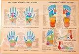 Zone reflexe main pied - poster plastifie