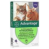 Advantage 80 für Katzen über 4 Kg