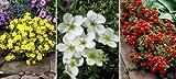 Fünffingerstrauch-Set. bestehend aus je 2 Pflanzen gelb. rot und weiß blühend - zu dem Artikel bekommen Sie gratis ein Paar Handschuhe für die Gartenarbeit dazu