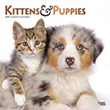 Kittens & Puppies - Kätzchen & Hundewelpen 2019 - 18-Monatskalender (Wall-Kalender)