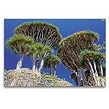 CALVENDO Premium Tela in Tessuto 120 cm x 80 cm Orizzontale, Drago Alberi - Immagine da Parete su Telaio, Immagine su Vera Tela, Stampa su Tela Natur Natura