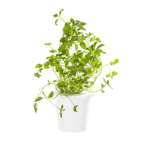 Click & Grow Oregano Refill 3-Pack for Smart Herb Garden - Garden Veggie Pizza