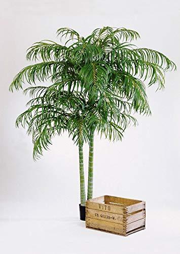 artplants Set 2 x Künstliche Areca Palme Naomi, 240 cm – 2 Stück Künstliche Goldfruchtpalme/Kunstpalme