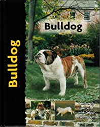 Bulldog - Pet love