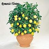 50 Semi / pack, limone Semi, Indoor Semi Outdoor Bonsai, commestibili semi gialli Lemon Tree, cibo biologico