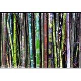 Creative Farmer Rare Rainbow Bamboo Imported New Arrival Seeds