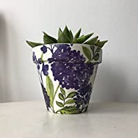 Purple Lilac Flower Succulent Cactus Terracotta Plant Pot 11cm