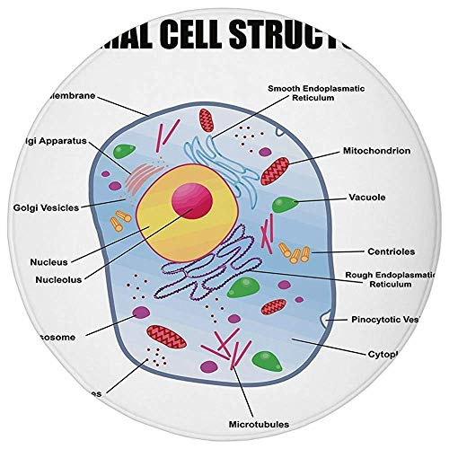 ,Educational,Microbiology Theme Animal Cell Structure Genetic Research School Study Science Decorative,Multicolor,Flannel Microfiber Non-slip Soft Absorbent,for Kitchen Floor Bathr ()