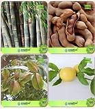 Pinkdose Baumsamen Combo Kleiner Bambus, Tamarind, Terminalia Arjuna, Passionsfrucht - Gelb Combo Für HomPinkdose Bamboo & F