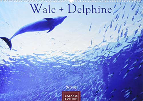 Delphine 2019 L 50x35cm