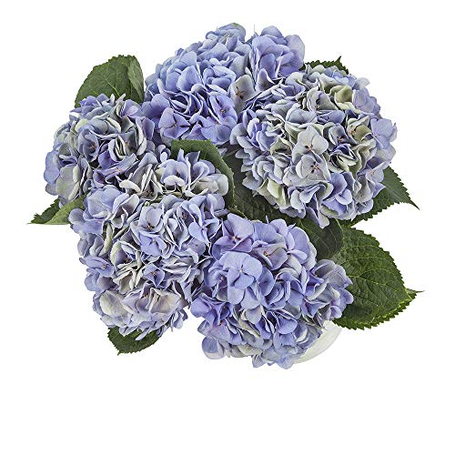 Choice of Green - 1 Hortensia - Bouquet - Hauteur ↕ 60 cm